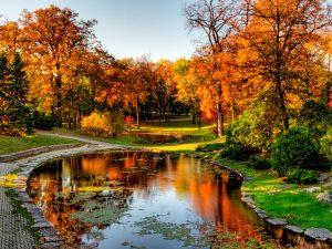 Emotional Journey to Maple Wonderland